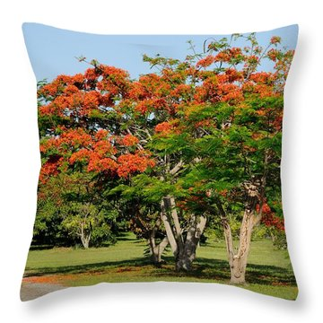 Royal Poinciana Tree Throw Pillow
