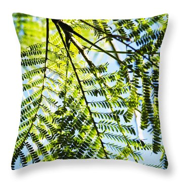 Royal Poinciana Tree Throw Pillow by Charmian Vistaunet