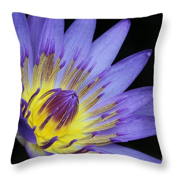 Royal Purple Water Lily #14 Throw Pillow