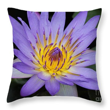Royal Purple Water Lily #4 Throw Pillow