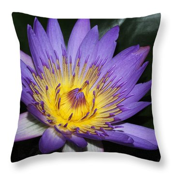 Royal Purple Water Lily #6 Throw Pillow