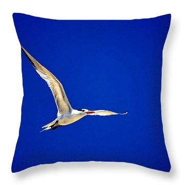 Royal Tern 2 Throw Pillow