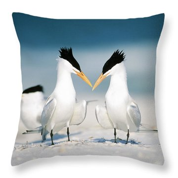 Royal Terns Throw Pillow