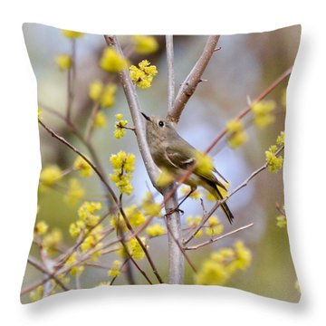 Throw Pillow featuring the photograph Ruby-crowned Kinglet by Kerri Farley