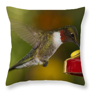 Ruby-throat Hummer Sipping Throw Pillow