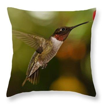 Ruby-throat Hummingbird Throw Pillow