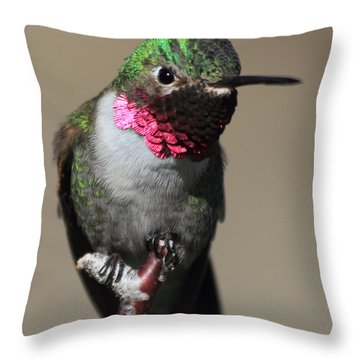 Ruby-throated Hummer Throw Pillow