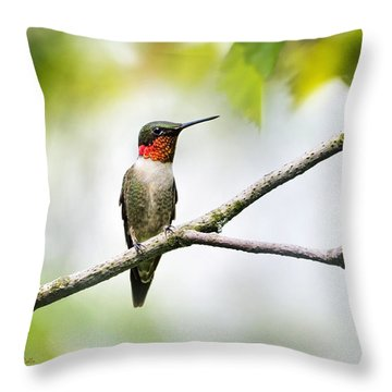 Ruby Throated Hummingbird Throw Pillow by Christina Rollo