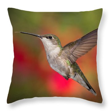 Ruby Throated Hummingbird Throw Pillow