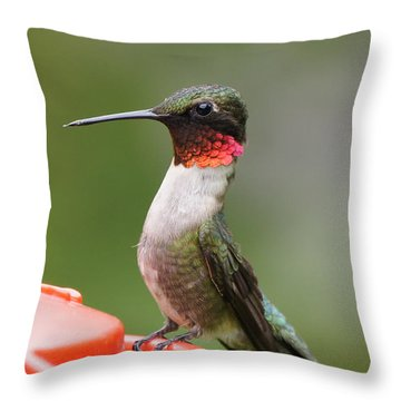 Ruby-throated Hummingbird Male 11702-1 Throw Pillow by Robert E Alter Reflections of Infinity