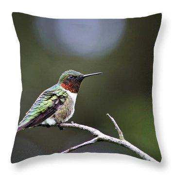 Ruby Throated Hummingbird Spotlight Throw Pillow