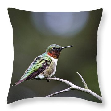 Ruby Throated Hummingbird Spotlight Throw Pillow by Christina Rollo
