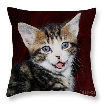Throw Pillow featuring the photograph Rude Kitten by Terri Waters