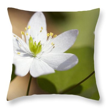 Rue Anemone Throw Pillow by Melinda Fawver