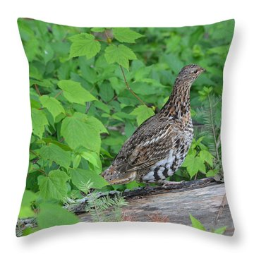 Throw Pillow featuring the photograph Ruffed Grouse by James Petersen