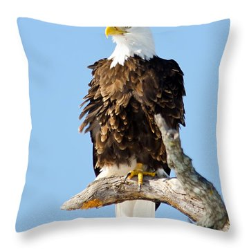 Ruffled Eagle Throw Pillow