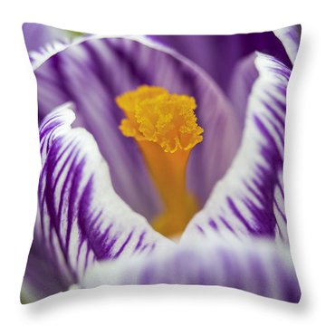 Ruffles And Stripes Throw Pillow by Caitlyn  Grasso