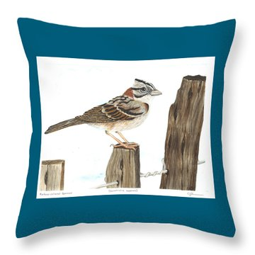 Rufous-collared Sparrow Throw Pillow by Cindy Hitchcock