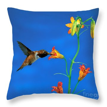 Rufous Hummingbird Throw Pillow by Anthony Mercieca