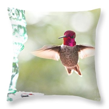 Rufous Hummingbird Throw Pillow