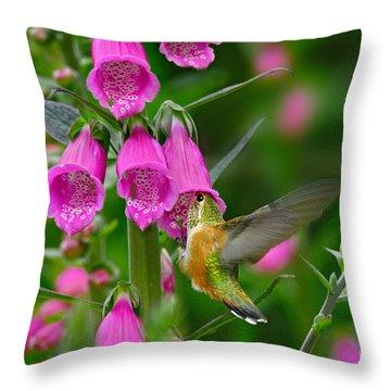 Rufous Hummingbird Throw Pillow by Thomas and Pat Leeson