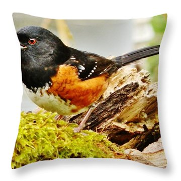 Throw Pillow featuring the photograph Spotted Towhee by VLee Watson