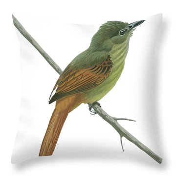 Rufous Tailed Flatbill  Throw Pillow by Anonymous