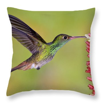 Rufous-tailed Hummingbird Throw Pillow by Anthony Mercieca