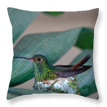 Rufous-tailed Hummingbird On Nest Throw Pillow by Gregory G Dimijian MD