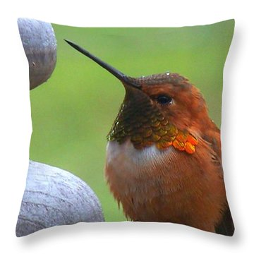 Rufus In The Rain Throw Pillow