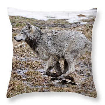 Throw Pillow featuring the photograph Running Timber Wolf by Wolves Only