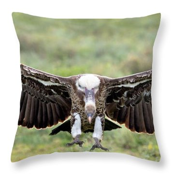 Ruppells Griffon Vulture Gyps Throw Pillow by Panoramic Images