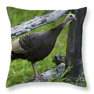 Rural Adventure Throw Pillow
