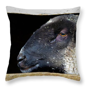 Throw Pillow featuring the photograph Rustic Ram by Brian Stevens