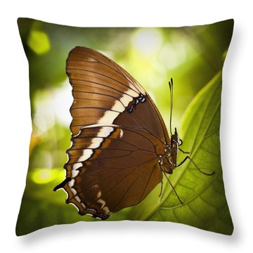 Throw Pillow featuring the photograph Rusty Tip Butterfly by Bradley R Youngberg