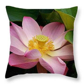 Sacred Lotus Throw Pillow by Byron Varvarigos