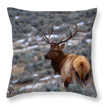 Sage Elk Throw Pillow