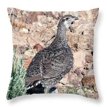 Sage Grouse Throw Pillow