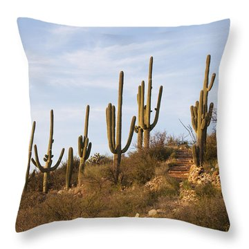Saguaro Cactus At Sunset Throw Pillow by Elvira Butler