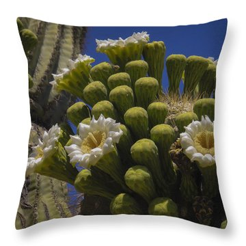 Saguaro Cactus Flowers Throw Pillow by Penny Lisowski