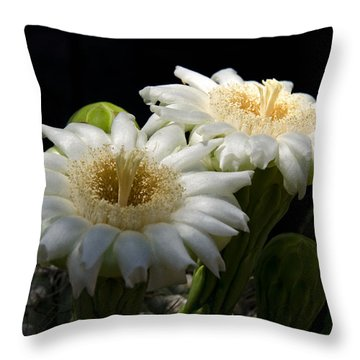 Saguaro Cactus Flowers  Throw Pillow by Saija  Lehtonen