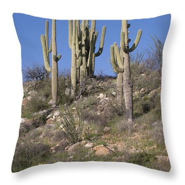 Saguaro Stand Throw Pillow by Elvira Butler