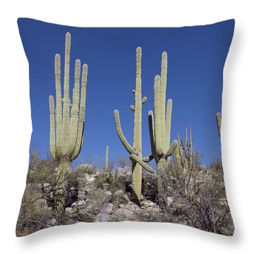 Saguaro Territory Throw Pillow by Elvira Butler