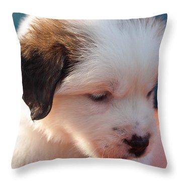 Saint Bernard Puppy Throw Pillow by Mechala  Matthews