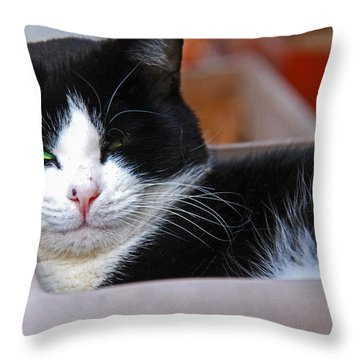 Salem Resting Throw Pillow by Andy Lawless