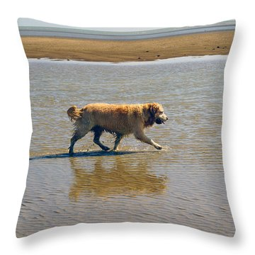 Throw Pillow featuring the photograph Sally Iv by Cassandra Buckley