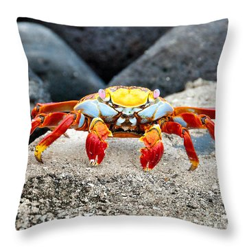Sally Lightfoot Crab Throw Pillow by William Beuther