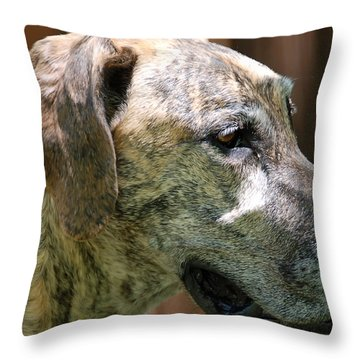 Sammy Throw Pillow by Aimee L Maher Photography and Art Visit ALMGallerydotcom
