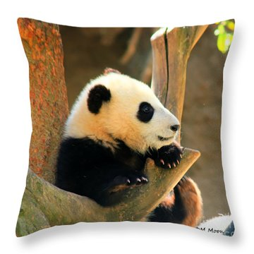 San Diego Zoo Panda Bear Xiao Liwu Throw Pillow