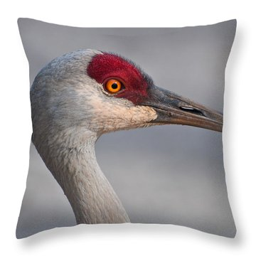 Throw Pillow featuring the photograph Sand Hill Crane Portrait by Sabine Edrissi